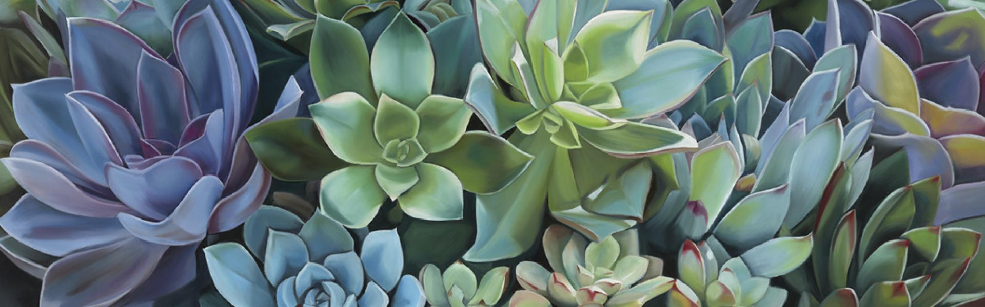 banner_succulents-a-f.20210516115417.jpg