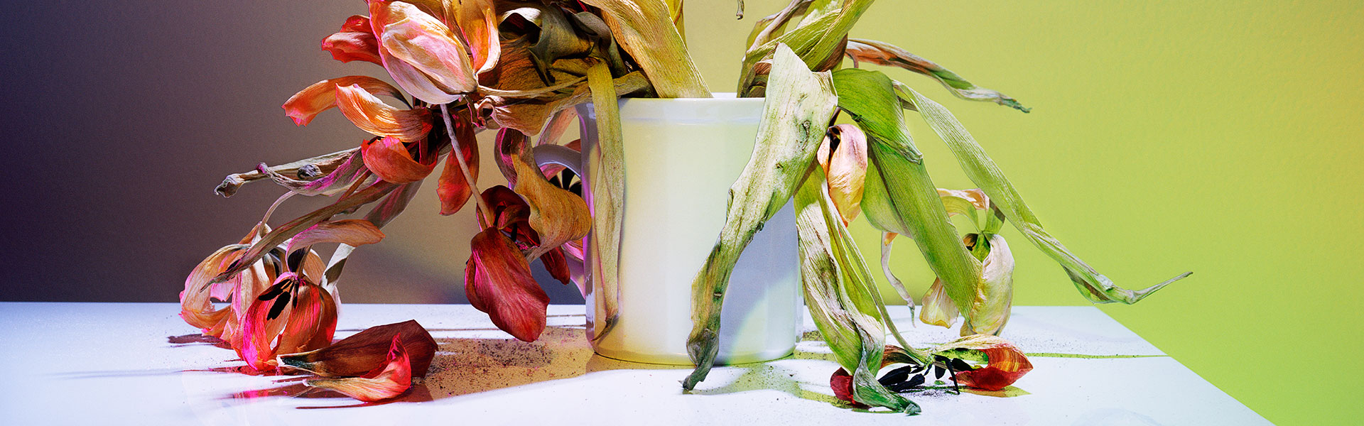 banner_tulips-Web-AmandaArcuri.20210601121209.jpg