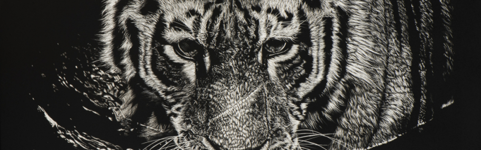 banner_Nathan-Cole-The-Tiger-Swims-at-Night-2019.20210519205439.jpg